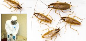 다양한 곤충의 치료에 대한 세부 사항 : 중요한 뉘앙스