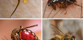 벌레 물린에 대한 응급 처치 규칙 : 먼저해야 할 일