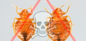 침대 벌레를위한 최선의 치료법 선택하기