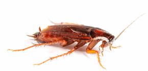 아파트에서 바퀴벌레를 독살 하는게 좋을까요?