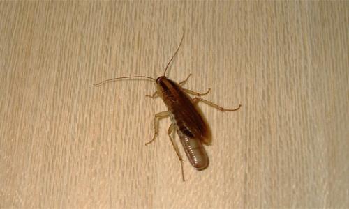 바퀴벌레가 아파트에 숨어있는 곳 ...