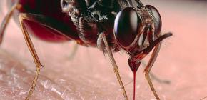 벌레 물기와 그 치료법