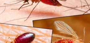 다양한 종류의 곤충과 그 사진들