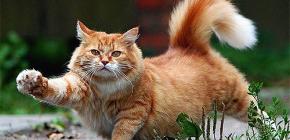 고양이에게서 벼룩을 신속하고 안전하게 제거하는 방법