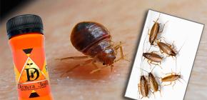 빈대와 바퀴벌레에 대한 구제 수단 Delta Zone : 설명 및 리뷰