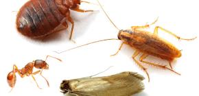 아파트에서 곤충과 싸우는 법