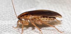 바퀴벌레가 사라진 이유와 사라진 원인 찾기