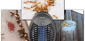 곤충 비행 및 포식을위한 효과적인 함정 검토
