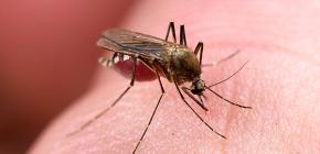 곤충에 대한 보호 수단 : 효과적인 옵션 검토