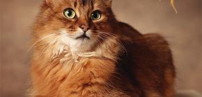 고양이에서 벼룩을 제거하는 방법 : 우리는 당신의 애완 동물을 직접 대우합니다.