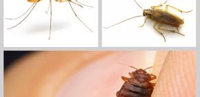 집안의 살충제 방충제 : 마약 리뷰