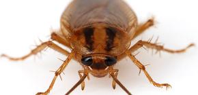 다양한 바퀴벌레 사진