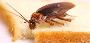 아파트에서 바퀴벌레를 제거하려면 어떻게해야합니까?
