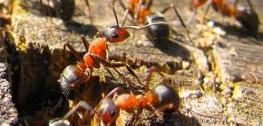 개미가 겨울을 준비하는 방법