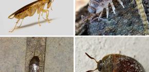 아파트에 살 수있는 곤충의 종류와 사진