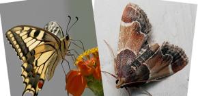 나방은 왜 코를 가지지 않는가? 나비가 아닌가?
