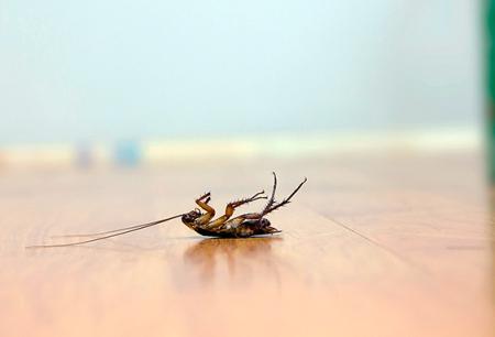 바퀴벌레에 효과적인 독약 선택
