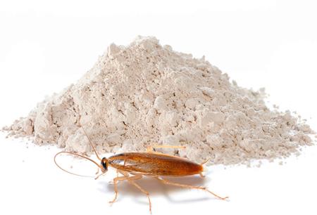 바퀴벌레 근절을위한 파우더 : 효과적인 수단 검토