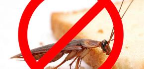 곤충의 파괴 : 유용한 팁과 중요한 뉘앙스