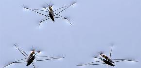 생활 곤충의 세부 사항 water strider
