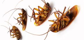 바퀴벌레에 대한 구획