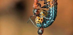 개미의 몸무게와 몸무게의 양